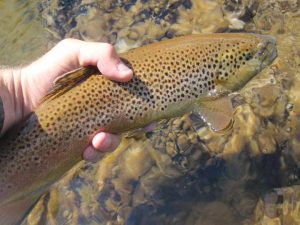 58950 1598397846767 1440638671 31566392 420538 n 300x225 Tennessee Tailwaters Stream Report   April 24, 2012