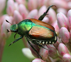 Japanese Beetle Wild Waters Stream Report for May 24th, 2012