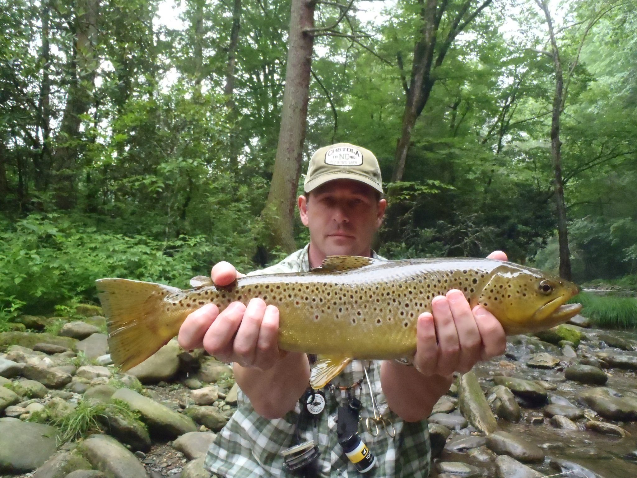 Davidson river fly fishing report june 20 2012 cwo for Davidson river fishing report