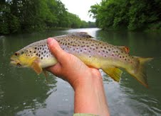 mail.google.com  Tennessee Tailwater 7/24/2012