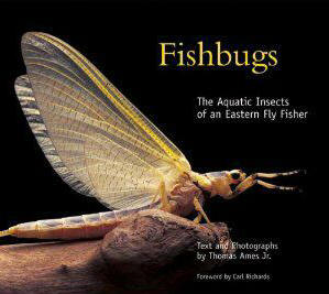 Fishbugs book Wild Waters Stream Report for September 6th, 2012
