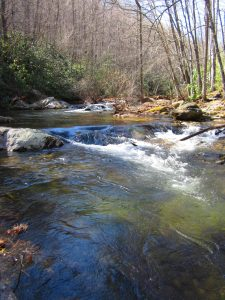 IMG 5597 225x300 Wild Waters Stream Report for March 21st, 2013